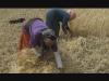 Uscire dall'ALECA e dal sistema alimentare mondiale per una nuova sovranità alimentare